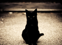 BLACK-CAT-large