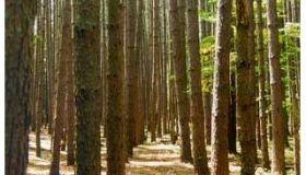 trees- test