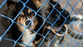 World Animal Day at Paluch animal shelter