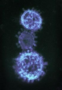 Previously Known Strains Of Coronavirus