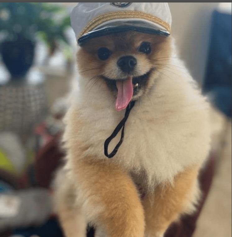 Cutest Pet Contest Winner