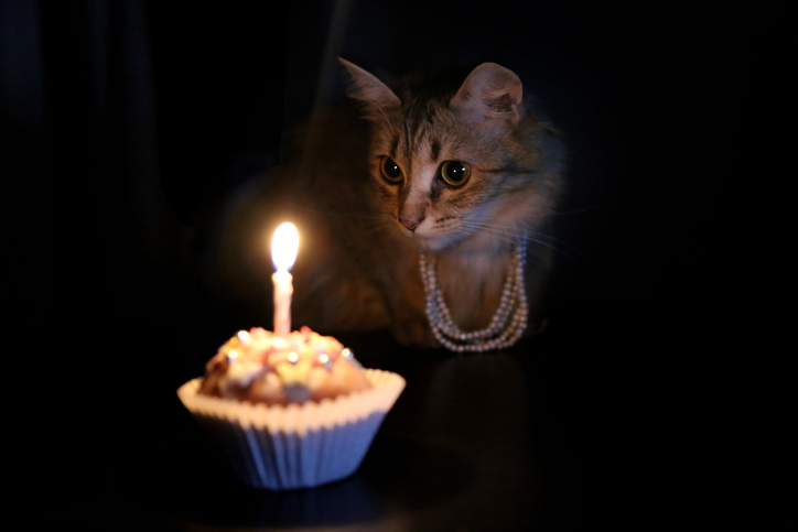 purrrrthday! Cat birthday cupcake.