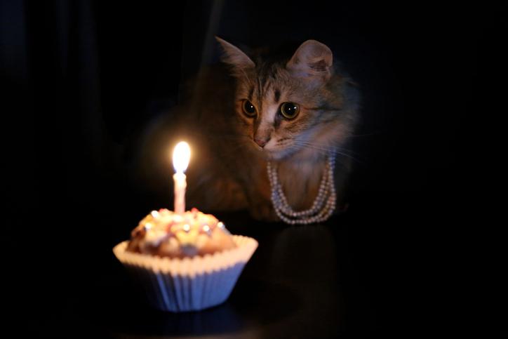 purrrrthday! Cat birthday cupcake.